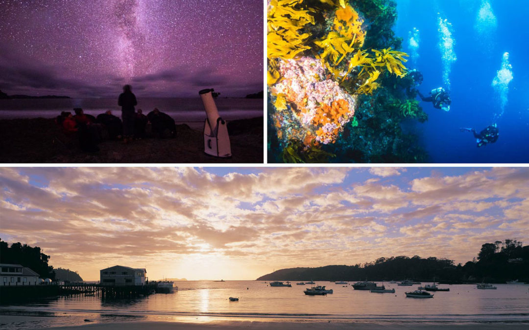 Four unforgettable small island experiences in New Zealand